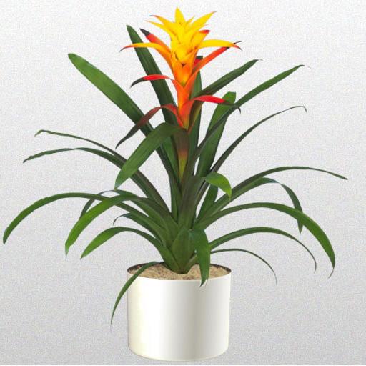 Fancy Plants Interior Plant Varieties